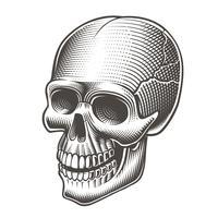 Vetorial, ilustração, de, um, preto branco, cranio vetor