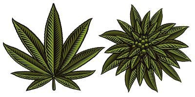 Vetorial, ilustração, de, cannabis, folheia