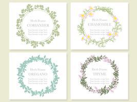 Conjunto de quatro quadros sortidos com várias ervas: coentro, camomila, orégano e tomilho.