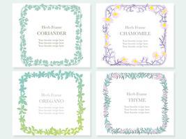 Conjunto de quatro quadros sortidos com várias ervas: coentro, camomila, orégano e tomilho. vetor