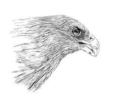 pássaro vetor