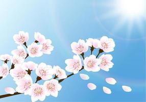 Vetor de papel de parede Cherry Blossom