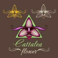 flor de orquídea rosa-roxo vector, ilustração vetor