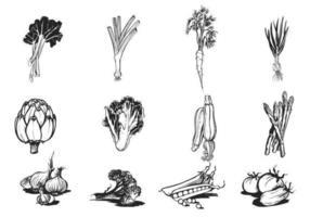 Mão desenhada vegetal pacote de vetores