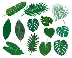 Coleção de folhas tropicais vector conjunto isolado no fundo branco - ilustração vetorial