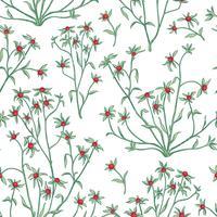 Padrão sem emenda floral. Fundo de flor. Florescer papel de parede com bagas e flores.