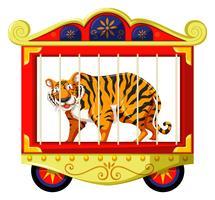 Tigre selvagem na gaiola de circo