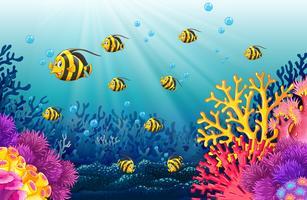 Muitos peixes sob o mar