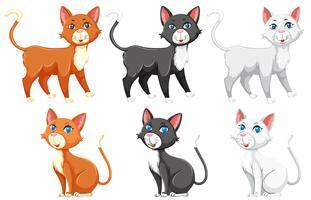 Um conjunto de gato diferente vetor