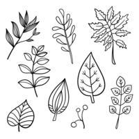 Mão botânica desenhados elementos vetor