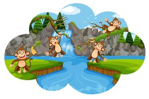 Conjunto de macacos na cena da natureza vetor