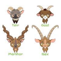 Conjunto de espécies de cabra vetor