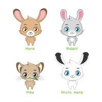 Conjunto de espécies de coelho vetor
