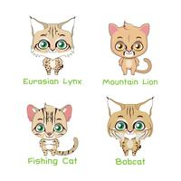 Conjunto de várias espécies felinas
