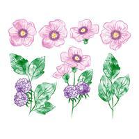 Elementos botânicos em aquarela vetor