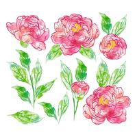 Elementos florais desenhados a mão em aquarela