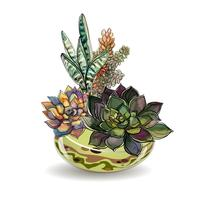 Suculentas em aquários de vidro. Areia colorida. Composições decorativas de flores. Gráficos. Aquarela Vetor.