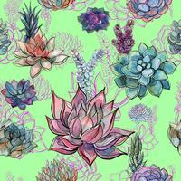 Aquarela padrão de flores suculentas.