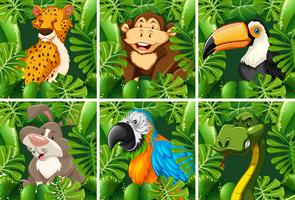 Animais selvagens na floresta vetor