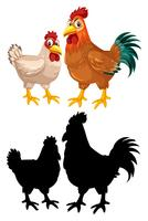 Caráter de galinha galinha galo vetor
