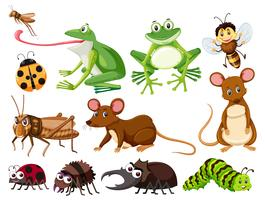 Conjunto de animais e insetos vetor