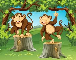 Dois macacos na selva vetor