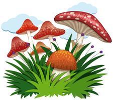 Cogumelos no jardim no fundo branco vetor