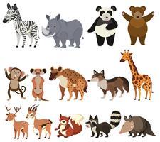 Um conjunto de animais no fundo branco