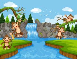 Macacos bonitos na cena da selva