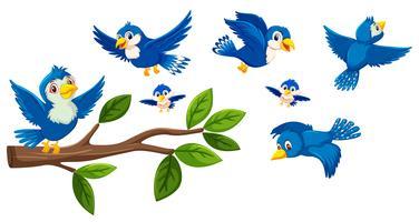 Galho de árvore e coleção de aves vetor