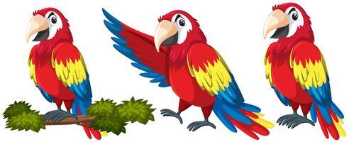 Jogo, de, papagaio, personagem vetor