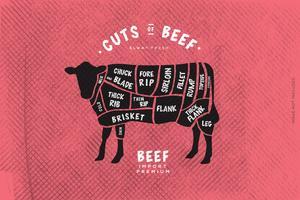 O guia do açougueiro, corte de carne vetor