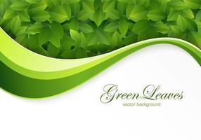 Vetor de fundo de folhas verdes