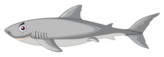 Um tubarão no fundo branco vetor