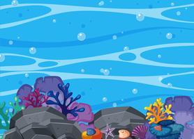 Coral bonito e cena subaquática