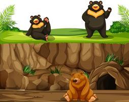 Urso na natureza