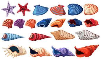 Diferentes tipos de conchas no fundo branco vetor