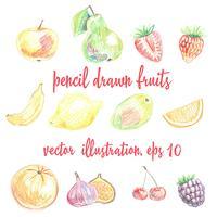 Conjunto de frutas e bagas desenhadas à lápis. Desenho à mão livre