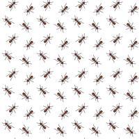 Padrão sem emenda de formigas vetor para design têxtil, papel de parede, papel de embrulho