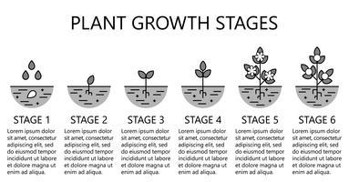 Estágios de crescimento vegetal infográficos. Ícones de arte linha monocromática. Modelo de instrução de plantio. Ilustração de estilo linear isolada no branco. Plantando frutas, legumes processo. Estilo de design plano. vetor