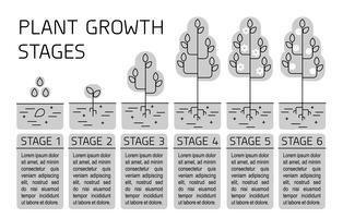 Estágios de crescimento vegetal infográficos. Ícones de arte de linha. Modelo de instrução de plantio. Ilustração de estilo linear isolada no branco. Plantando frutas, legumes processo.