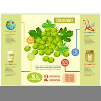 vetor de infográfico de chardonnay