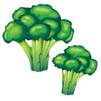 ilustração vetorial de brócolis