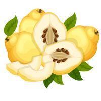 ilustração vetorial de marmelo