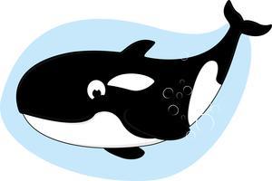 Baleia assassina vetor