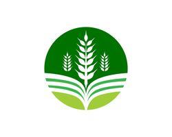 Imagem de vetor verde único negócio agricultura logotipo modelo