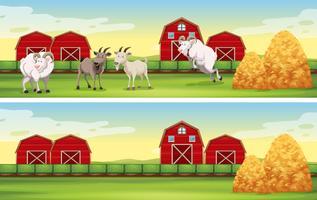 Cena de fazenda com cabras e celeiros vetor