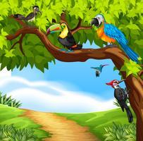 Aves selvagens na árvore vetor