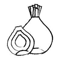 figura orgânica cebola nutrição vegetal gosto vetor