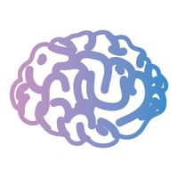 linha anatomia do cérebro humano para criativo e intelecto vetor